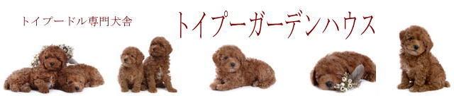 子犬 譲り ます 無料 埼玉